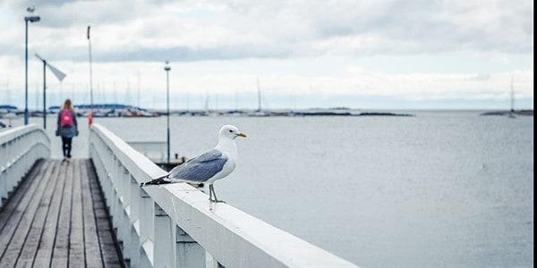 Lintujen Häätäminen