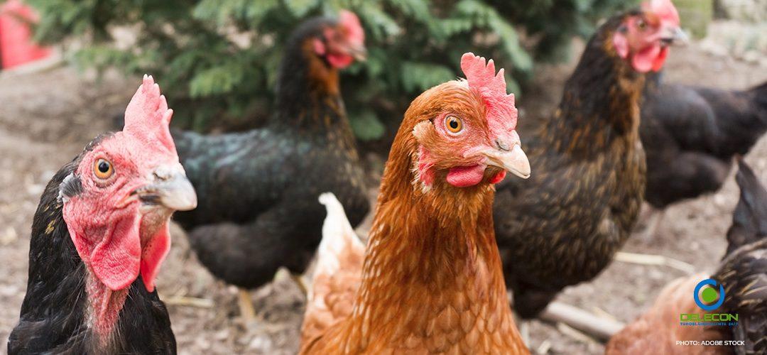 Lintuinfluenssa lisääntynyt Euroopassa